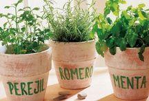 Garten Kräuter anbauen- ziehen