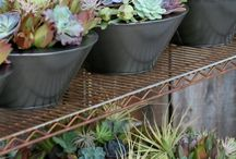 succulents / by Mar Ley