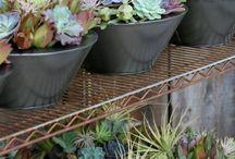 garden kaktus dalam pot