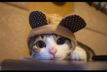 gatos /  gatos tiernos *-*