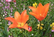 PLANTS&FLOWER / 気になる植物