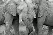 Elephants / by Jo Murray