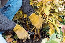 Fall Clean up / Fall Clean up for home and garden!