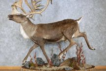 Tantalizing Taxidermy