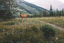 Natur wild