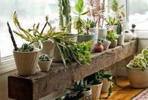 Plants & decorations