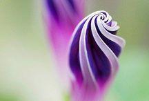 flóra