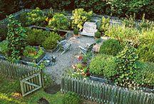 Grădină de zarzavat