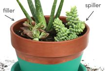Growing & Propagating Succulents