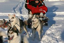 HondenSlee/DogSled