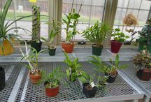 Orchid Greenhouse / Orchids love greenhouses.  They thrive, grow and bloom here. / by Solar Innovations, Inc.