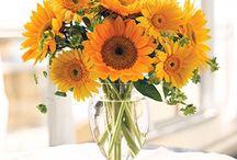 Sunflowers / by Amanda Louchart
