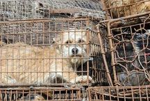 STOP the china dog and cat meat trade :(