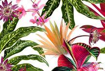 tropik