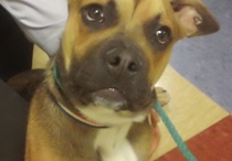 Adoptable Dogs - Cincinnati / by KISS 107