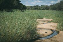 Scenery in Kruger Park