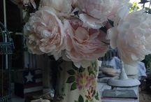 Mis plantas mis flores mi jardin