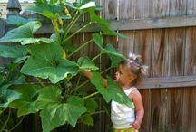 vertical zucchini