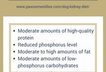 Dog Diet and Supplements / Articles on healthy dog diet and supplements for different old dog health issues, such as diabetes, Cushing's disease, kidney disease, etc.