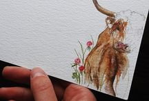 Highland Coo drawings/paintings