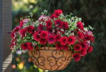 Hanging Baskets, Containers & Flowers