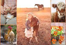 Country Life  Orange