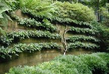 ESPALIER / Espalier is the technique of training plants to grow in a formal pattern along a flat wall or garden trellis.   / by Unique by Design