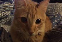 Mateo cat