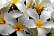 1 virág
