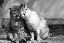Котички