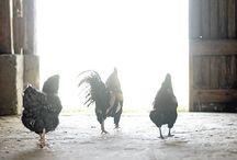 Farm, country
