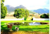 La Bri Winery Estate