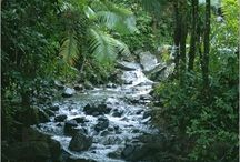 Lebensraum Regenwald / Dschungel