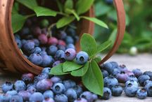 Blueberries / Health benefits of Blueberries