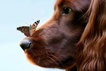 For the Love of Dogs / by Cathy Zeller