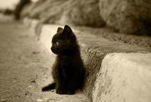 Purrrrr / I love cats / by Chrissy O.