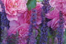 Сountryside - wild flowers / by Svetlana