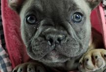 ♥♥ Puppies ♥♥