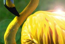 Animais amarelos