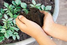 pěstování rostlin .........