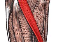 Musculoskeletal