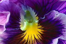 Plantas e flores / mostrar a beleza que é a natureza