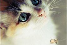 ROBA DA GATTI / Immagini, foto, tutto sui gatti