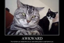 Hilarious cats / by Laura Wieck