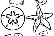 Deniz altı canlıları ve deniz kabuklarını çizimleri