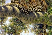 Wildlife  / Wildlife Varieties / by Ramabhadran Sreedharan