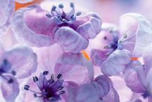 Сиреневое вдохновение / Вдохновение сиреневым цветом