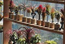 plantrakke
