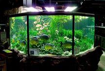 pasta dos aquários