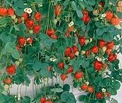 Puutarha/kukkatoiveet (tauolla)